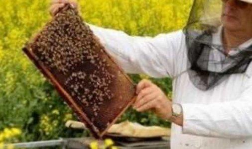 Фестиваль бджолярів «KROPhoneyfest»