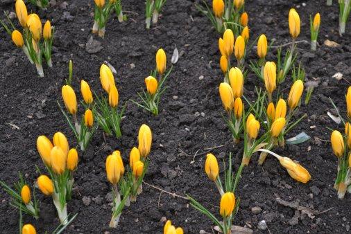 Весна в кировоградском Дендропарке