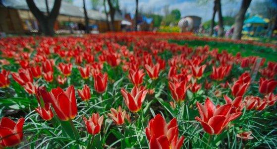 Сезон цветения в Дендропарке