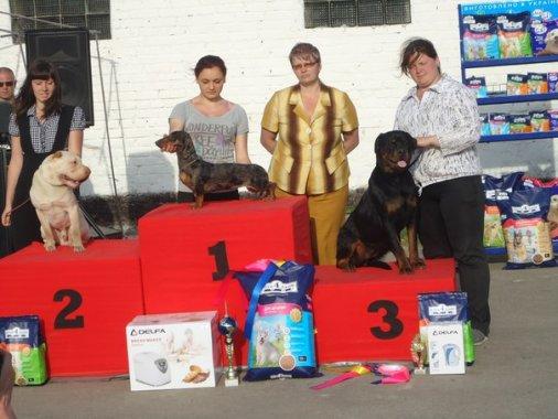 Выставка собак состоялась в Кировограде