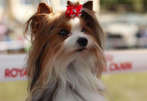 Собаки разных пород и мастей соревновались в Кировограде