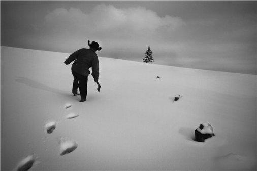 Увидел. Снял. Победил: Александриец победил в фотоконкурсе «Жизнь вопреки…»