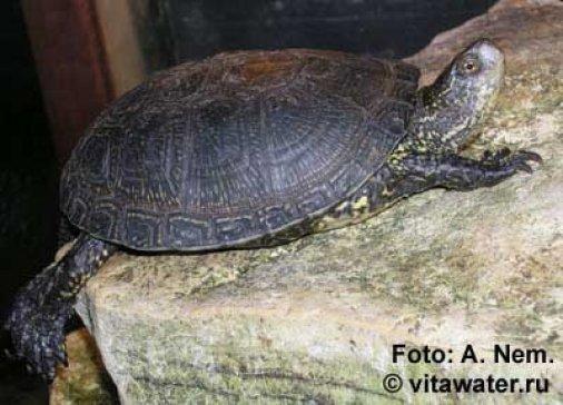 Черепахи в городе: Где увидеть Тортиллу?