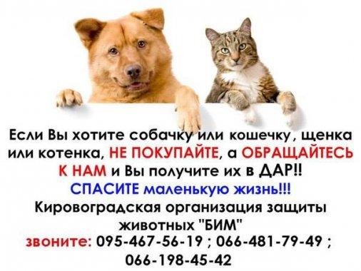 """Если хотите собачку или кошечку - не покупайте, а обращайтесь в """"БИМ"""""""