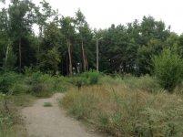 Парк Пушкина - лето 2013