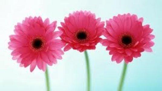 Еще сегодня в магазине «Омела» скидки на цветы