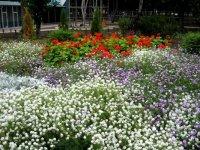 фото - dendropark.com.ua