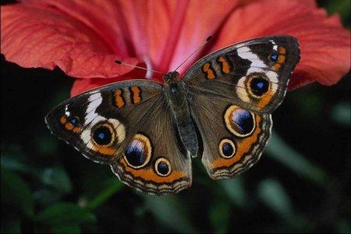 Гигантские бабочки - теперь и в Кировограде!