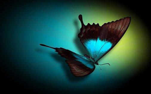 Выставка живых бабочек объявляет о старте викторины!