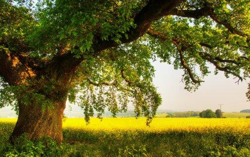 На Кіровоградщині школярі та студенти висадили гектар дубів