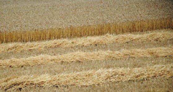 Органічне землеробство – здорове майбутнє України