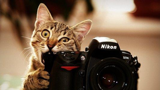 Очередная выставка юного фотографа!