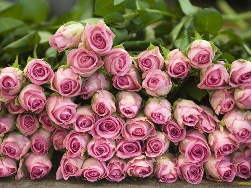 Мільйон червоних троянд – на полотні