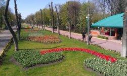 фото з сайту Дендропарку - dendropark.com.ua