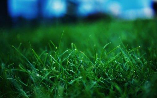 """На стадіоні """"Зірка"""" почали класти газон на поле"""