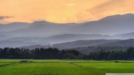 Земельна реформа: як не протиставити орендаря орендодавцю?