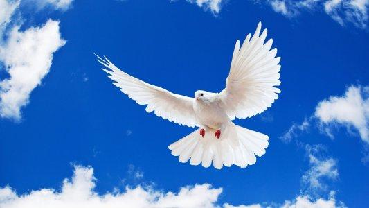 """Удивительное """"Письмо мира"""" написала юная кировоградка"""