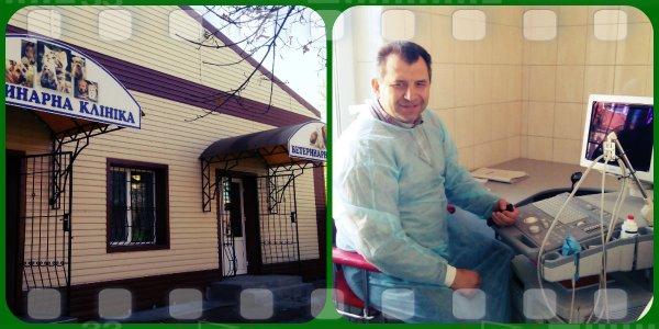 Бонуси для домашніх улюбленців надає Кіровоградська ветеринарна клініка