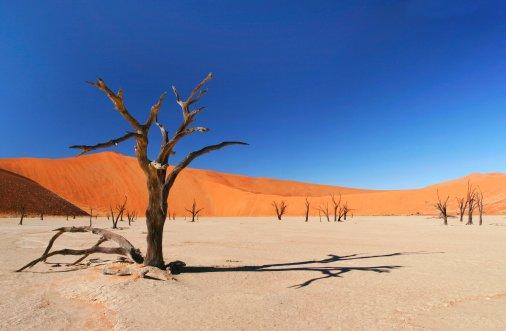 Опустелювання: землевпорядна служба Кіровоградщини б'є на сполох!