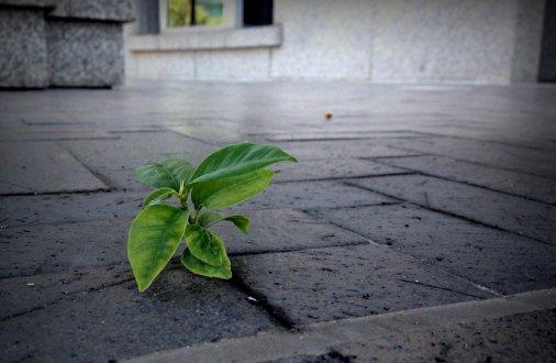 Кіровоградські родини, мешкаючи в архітектурній пам'ятці, врятували її від руйнації