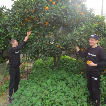 Вітаміни - прямо з дерева!