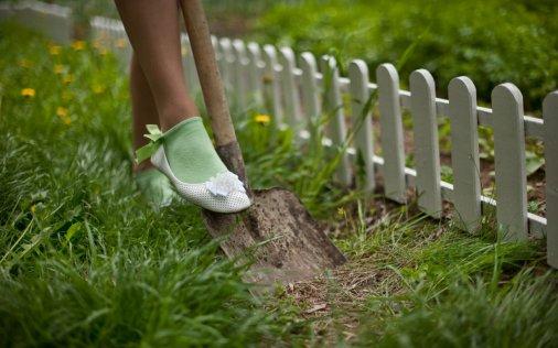 Власникам городів і дач: Бережіться шкідників, але й отрутохімікатами не зловживайте