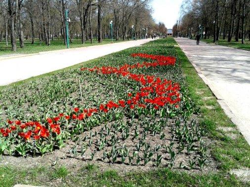Перші квіти на просторах Дендропарку