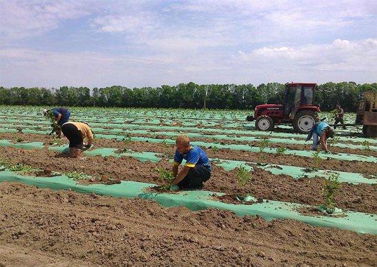 """с.Снітків.  Фермерське господарство """"Щедрий хутір"""", фото з сайту http://agravery.com"""