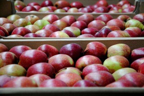 Аграрні розписки набувають яблучного смаку