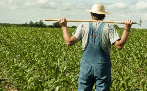 Майже мільйон отримав фермер з Маловисківського району на розвиток господарства