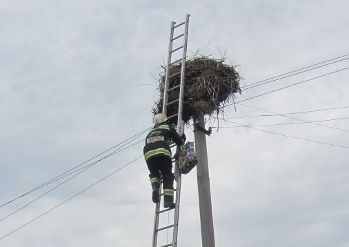 Рятувальники допомогли лелеці повернутись в гніздо