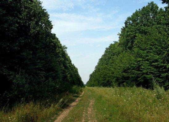 Чорний ліс, фото з сайту ua.igotoworld.com