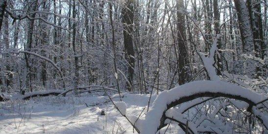 Чорний ліс, фото з сайту we.org.ua