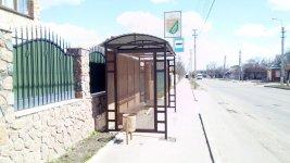 Зупинка громадського транспорту, місто Знам'янка