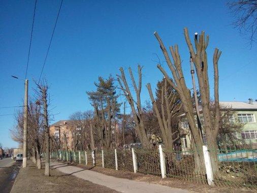 """""""Дихати по-людськи"""": У Кропивницькому стартує інформаційна кампанія на захист дерев"""