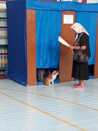 Голосування із собачкою