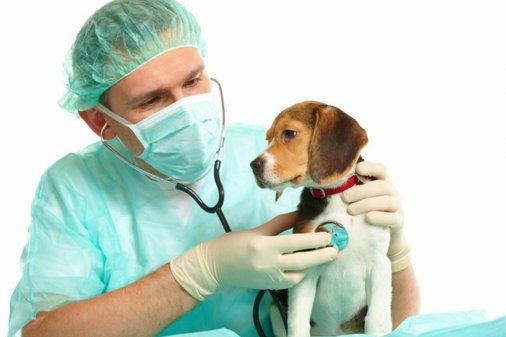 На Кіровоградщині потрібні 10 лікарів ветеринарної медицини