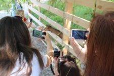 "Ферма ""Лісова коза"", авторка фото - Олександра Бур'яненко"