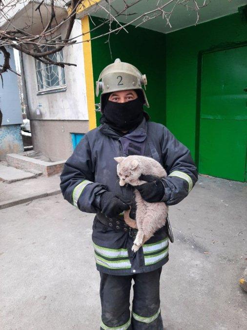 Рятувальники Кіровоградщини визволили кота та собаку