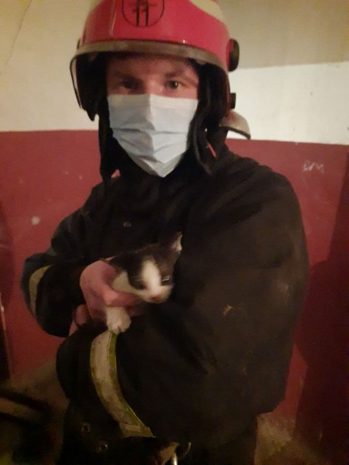 Кропивницькі рятувальники визволили кошеня з шахти ліфта