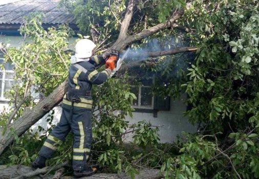 Рятувальники Кіровоградщини усувають аварійні дерева та гілки