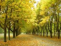 Алеи парка осенью