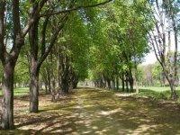 Алеи парка летом